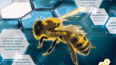 Photo of ما علاقة مايكروسوفت بالذكاء الاصطناعي وعالم النحل؟