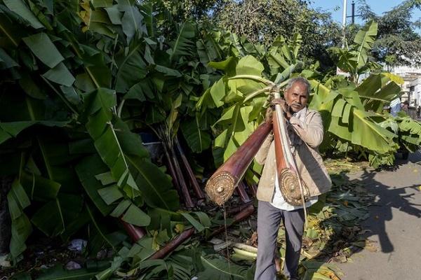 شركة ناشئة تصنع من ألياف الموز سجادًا قابلا للتحلل وملابس في المستقبل