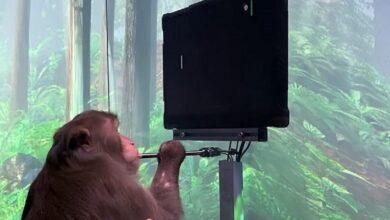 Photo of قرد مزود بشريحة Neuralink يمكنه التحكم في كمبيوتر بعقله فقط